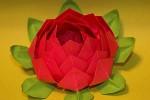 lotusgo6