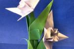 edelweiss_p